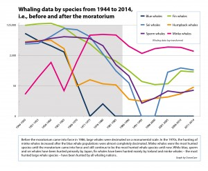 en_statistics-whaling-data-species-media